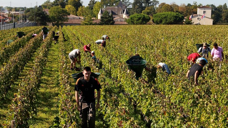 Chinese winemakers experience surge in home demand.jpg